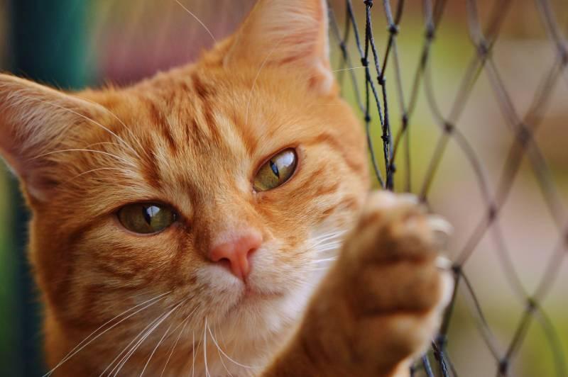 Perché i gatti leccano e poi mordono?