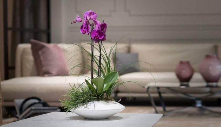 Dove posso comprare piante online con miglior rapporto qualità/prezzo?
