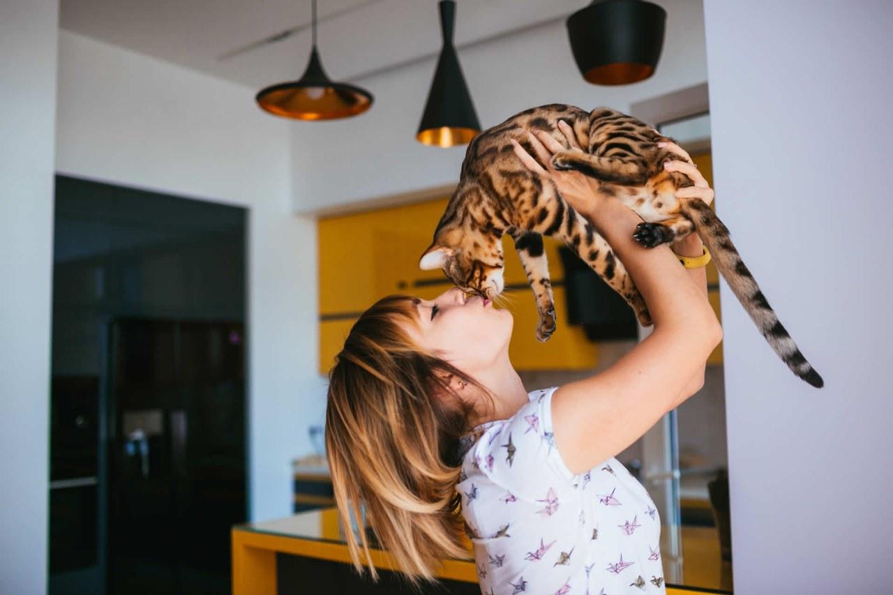 Le 10 razze di gatti più famose al mondo