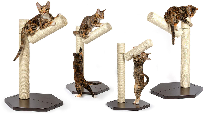 Come scegliere e utilizzare un tiragraffi per il tuo gatto